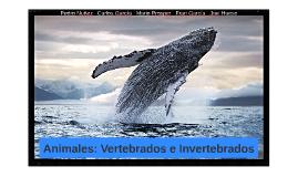 Animales: Vertebrados e Invertebrados | 1ºBach Biologia | Colegio El Armelar