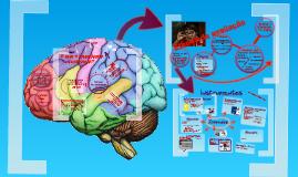 Copy of Avaliação Neuropsicológica infantil