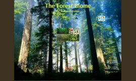 Ecological Life of the Forest Biome