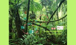 Tropische regenwoudem