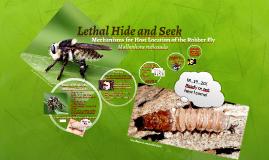 Lethal Hide and Seek