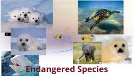 Copy of Endangered Species
