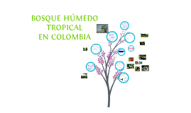 Copy of BOSQUE HUMEDO TROPICAL