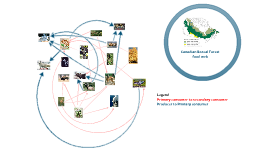 Copy of Boreal forest food web