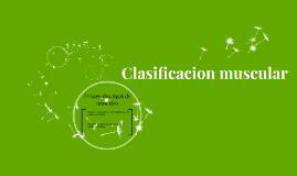 clasificacion muscular