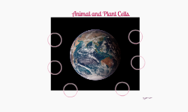 Animal and Plant Cells.