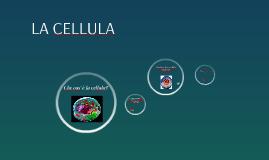 La cellula (con video)