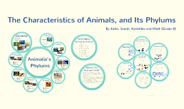 The Characteristics of Animals, and Its Phylums