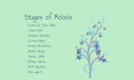 bio week 4: team yellow - meiosis