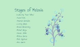 bio week 4: team yellow - meiosis