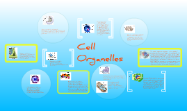 Copy of Copy of Cell Organelles