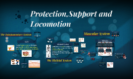 Protection,Support and Locomotion