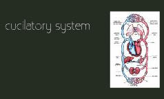 Cucilatory system