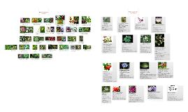 Plant Taxonomy Test 4