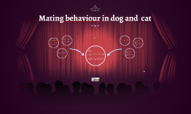 Mating behaviour in dog and tom cat