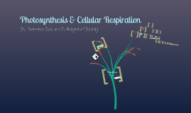 Copy of Photosynthesis & Cellular Respiration