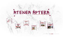 ATENEA APTERA