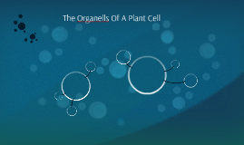 The Organells Of A Plant Cell