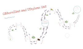 Gibberellins and Ethylene Gas