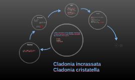 Cladonia