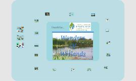 Wetlands first grade
