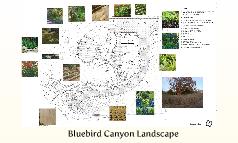 Bluebird Canyon Landscape