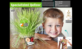 Specializimi Qelizor