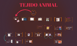 Copy of TEJIDO ANIMAL