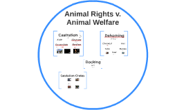 Animal Rights v. Animal Welfare