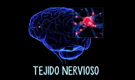 Copy of Tejido Nervioso