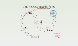 HUELLA GENETICA