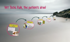 Vet Tech's Rule, the patients drool