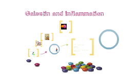 Galectins and Inflammation