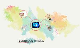 Glandula pineal.