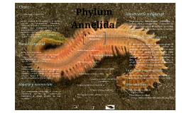 Phyllum Annelida
