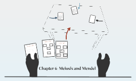 Chapter 6  Meiosis and Mendel