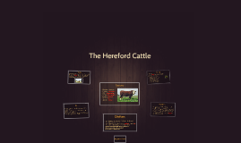 The Hereford Cow