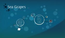 """Sea Grapes"""