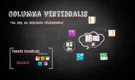 Columna Vertebralis-dr.nes