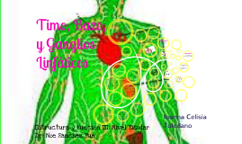 Anatomia de Timo, Bazo y Ganglios Linfaticos