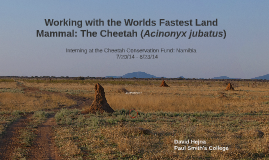 NEW- Working with the Fastest Land Mammal: The Cheetah
