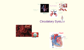 Copy of Circulatory System