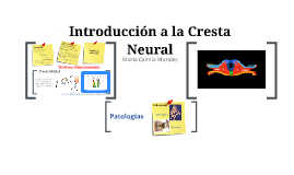 Copy of Cresta Neural