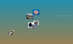 Identifying Rock Types