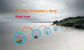 An Young Orangutan's Story
