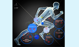 Respostas metabólicas ao Exercício Prolongado