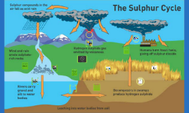 Copy of Sulfur cycle