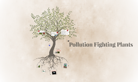 Pollution fighting plants by c g on prezi for Pollution fighting plants