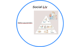 Social Liv