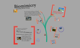 Copy of Biomimicry